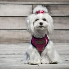 Dog Dogs Harness - Candy Pink Accessories