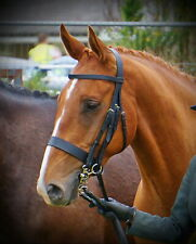 """FSS German Leather Traditional English Working Hunter Show Hunt Bridle Wide 3/4"""""""