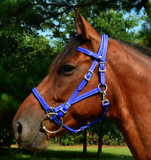 ANY COLOR Quick Change HALTER BRIDLE Headstall W SNAP ON BROWBAND Beta Biothane