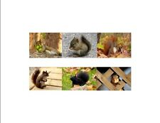 Gifted Pet Creations ~ Squirrels! Custom Notecards (Blank)