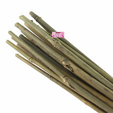 61CM BAMBOO CANES GARDEN SUPPORT STRONG OUTDOOR INDOOR POLES WOOD STICK STRONG