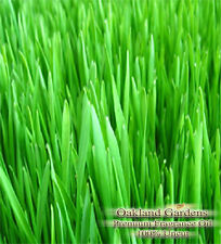 FRESH CUT GRASS Fragrance Oil - Scent of freshly mowed grass on the air....