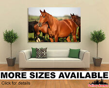 Wall Art Canvas Picture Print - Pack of Horses in the Meadow - 3.2