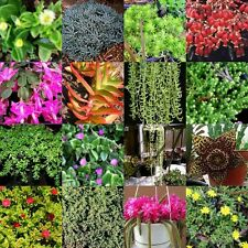 85 Different Succulent Cuttings + 85 Pots Drought Hardy Plants Succulents Cacti