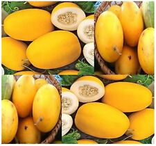 VINE PEACH Melon Seeds - Cucumis melo - ONLY 80 Days to harvest