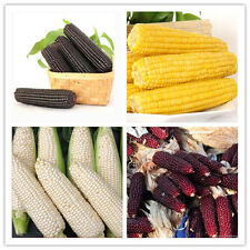 20PCS Heirloom Vegetable Seeds NON-GMO Many Varieties Maize Seeds Organic Hot v5