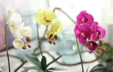 1 X Beautiful Butterfly Orchid Bonsai Orchid Fake Flower Home Desk Decor