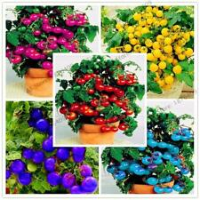 200pcs/bag Bonsai Tomato Plant Cherry seeds Potted Sweet Fruit Vegetable Organic