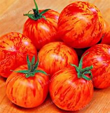 100pcs Rare Tomato Seeds Bonsai Organic Vegetable & Fruit Seed Potted Plant For