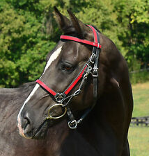 * HORSE SIZE * Any 2 Color HALTER BRIDLE HEADSTALL Beta Biothane Trail Endurance