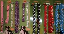 Small Dog Puppy Collar and Lead  Leash Set in 8 Colours Brand New Harness Safety