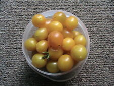 Heirloom Tomato Seeds Wide Selection