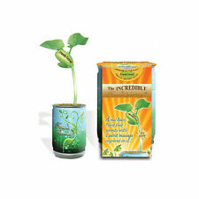 Assorted Greeting Card Bean Plant in a Can- Sprouts with Your Message on Leaves!