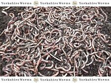 RED WORMS + DENDROBAENA WORMS + TIGER WORMS - MIXED PACKS - (35g to 250g)