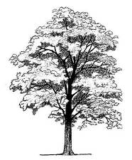 Unmounted Rubber stamps - Tree