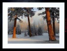 PHOTO COMPOSITION PINE TREES FOREST SWIRL EFFECT FRAMED PRINT F97X9840
