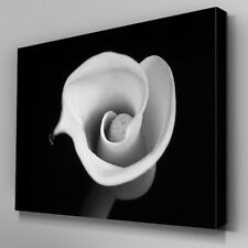 FL459 Black and White Flower Canvas Wall Art Ready to Hang Picture Print