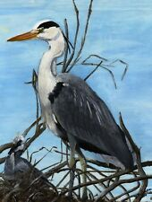 """Art Print or Canvas -""""Proud Father Heron"""""""