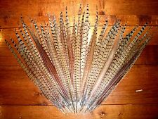 Pheasant Tail Feathers ~ Fly Tying, Millinery, Arts, Crafts, Cat Toys