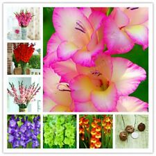 Gladiolus Bulbs, Not Gladiolus Seeds, Rare Bulbs, 10Pcs, Beautiful Flower