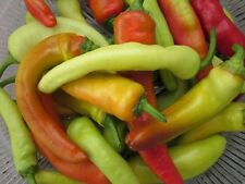 Hungarian Sweet Wax Pepper - Sweet and Juicy! A GREAT Eating Pepper -  FREE SHIP