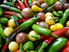 Ultimate Mixed Pepper Deal!!!  Over 120 different varieties!!!! All Kinds!!!!!!