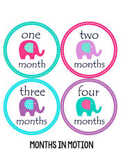 Baby Girl Monthly Photo Shirt Stickers 12 Month Milestone Sticker Newborn #098