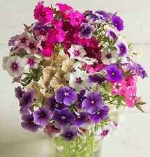 Annual Phlox Mixed Colors - wide variety of colors - Easy-to-grow!!! Beautiful!!