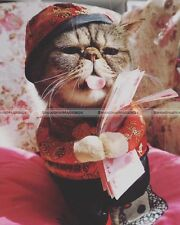 Pet Chinese Traditional Style Dog Cat Coat W Hat Happy New Year Funny Clothes