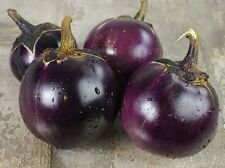 Thai Round Purple Eggplant Seeds  VERY Tasty! and Easy to Grow!!! Prolific!!!