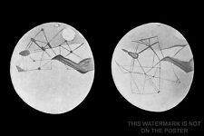 Poster, Many Sizes; Mars Map Martian Canals Depicted By Percival Lowell
