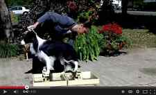 Dog Show Training Tool for Teaching the Perfect Pose Happy Legs Stand and Stay