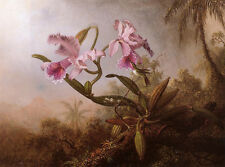 Heade Orchids and Hummingbird 1875 - Stretched Giclee Canvas