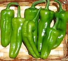 Pepperoncini Pepper (Hard to Find) Seeds - A delicious Greek pepper- Free Ship!
