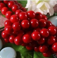 4-12mm Red Coral Round Loose Beads 15''