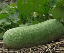 Hairy Gourd-Winter Melon - Sweet and mild with succulent flesh. Great Tasting!!!