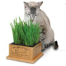 Egyptian Wheat Seeds - Dogs & Cats love it!! Certified Organic Seeds -Free Ship!