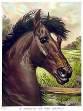 High Quality POSTER on Paper or Cotton Canvas.Decor Art.Fine Breed Horse.4148