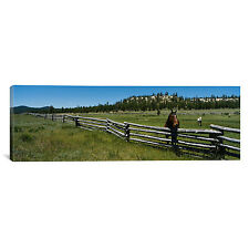 Panoramic Two Horses in a Field, Arizona Photographic Print on Wrapped Canvas