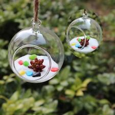 Hanging Glass Globe Flower Vase Bottle Landscape Terrarium Container Garden Deco