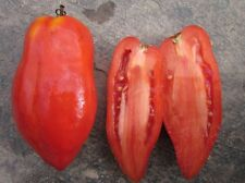 Polish Linguisa Tomato Seeds - Very sweet with few seeds!  Early maturing!!