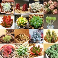 60pcs/Pack  Succulent Seeds Mini Potted Flower Seed Anti-radiation 15 Styles NEW