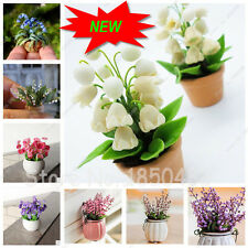 100PCS Lily Of The Valley Flower Seeds, Potted Plants,Convallaria Majalis Seeds