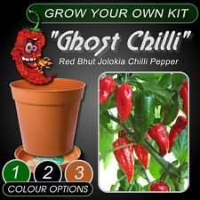 Grow Your Own Kit - Ghost Chilli Pepper Plant - Red Bhut Jolokia + Instructions