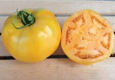 Golden Jubilee Tomato Seeds - Meaty, thick, golden-orange skin!! Delicious!!!!