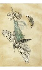AMELIA JANE MURRAY Fairy Standing On A Moth new CANVAS! various SIZES, BRAND NEW