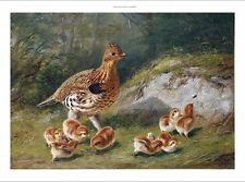 ARTHUR FITZWILLIAM TAIT A Grouse And Chicks new CANVAS! various SIZES, BRAND NEW