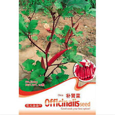 FD1289 Good Effect Herb Kidney Dish Seed Okra Seed Abelmoschus ~1 Pack 10 Seed A