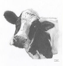 COW CALF Limited Edition art drawing print 2 sizes A4/A3 &  card available