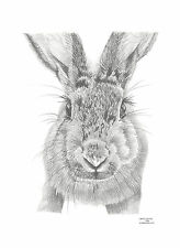 HARE rabbit Limited Edition art drawing prints  2 sizes A4/A3 &  Card Available